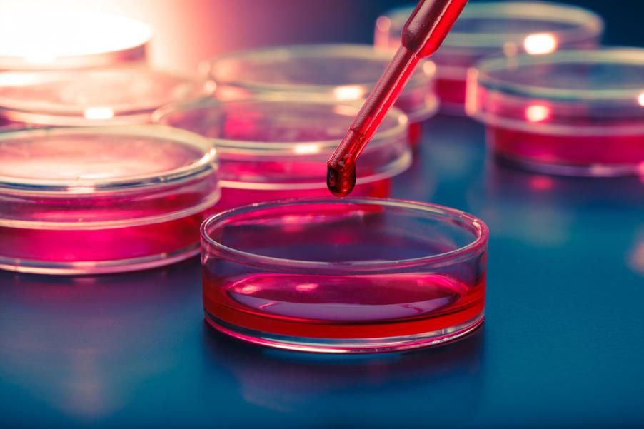 human stem cells