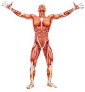 Rejuvenate Your Body: Guide to Understanding Regenerative Medicine