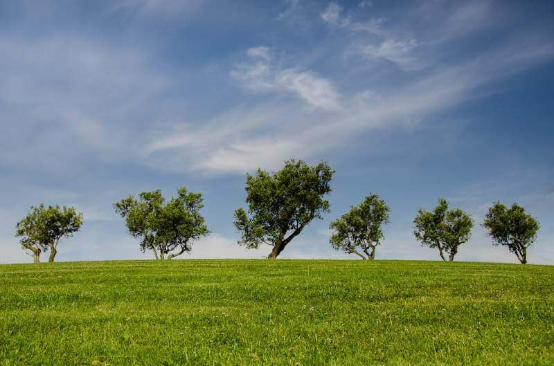 trees-hill-green-blue-nature-park