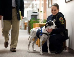 What Is A Police Therapy Dog Supposed To Do? Not Steal Toys